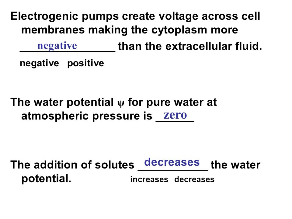 Electrogenic pumps create voltage across cell membranes making the cytoplasm more