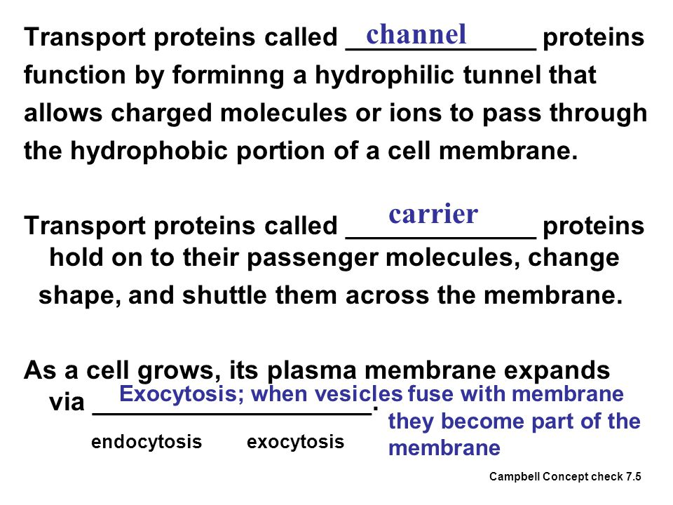 channel carrier Transport proteins called _____________ proteins