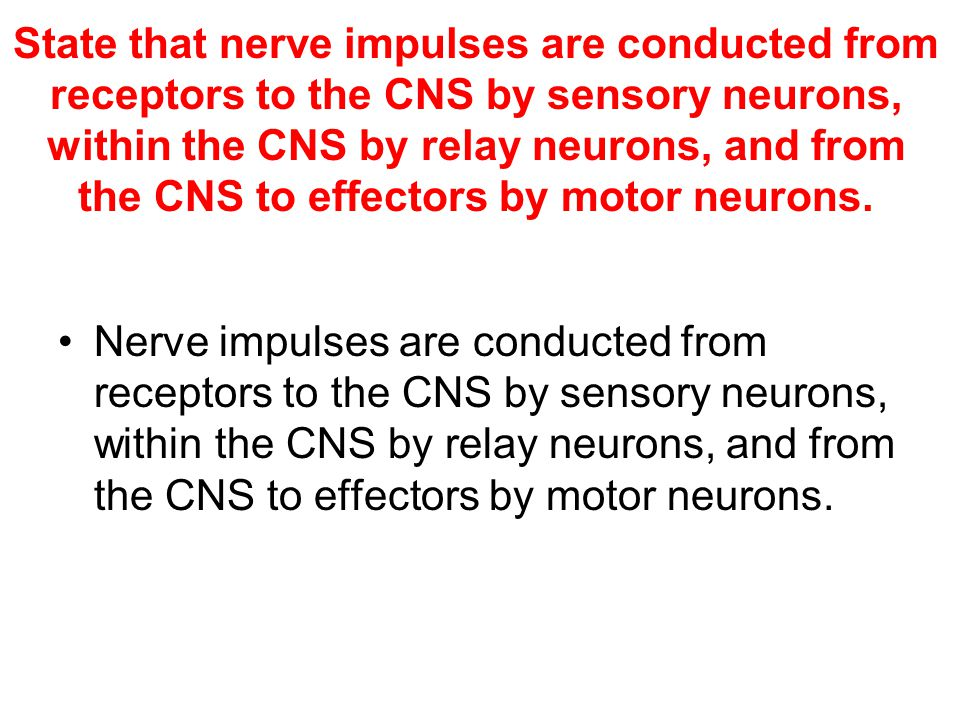State that nerve impulses are conducted from receptors to the CNS by sensory neurons, within the CNS by relay neurons, and from the CNS to effectors by motor neurons.