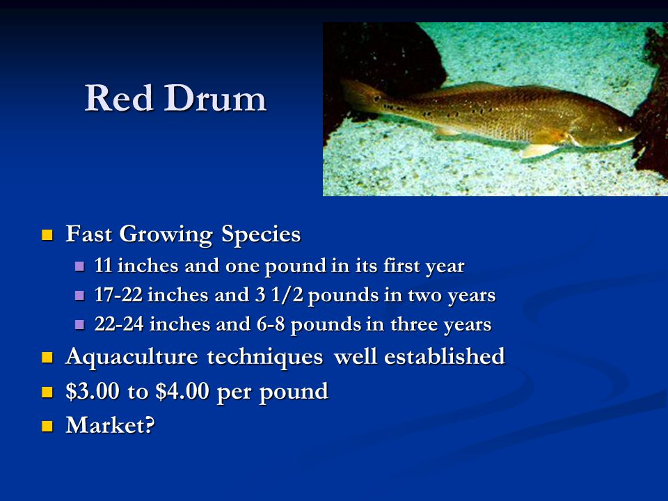 Red Drum Fast Growing Species Aquaculture techniques well established