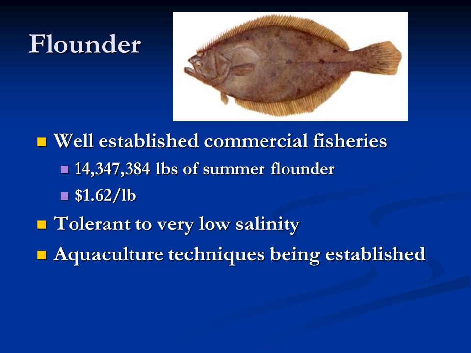 Flounder Well established commercial fisheries