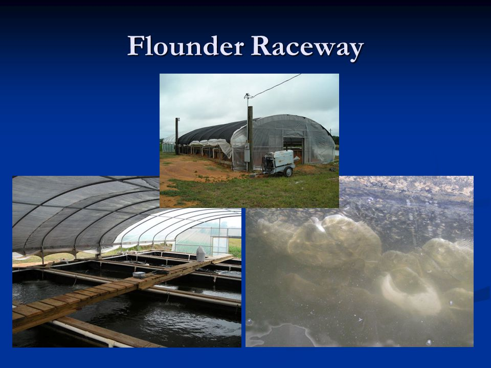 Flounder Raceway Currently performing production trials in West Alabama.