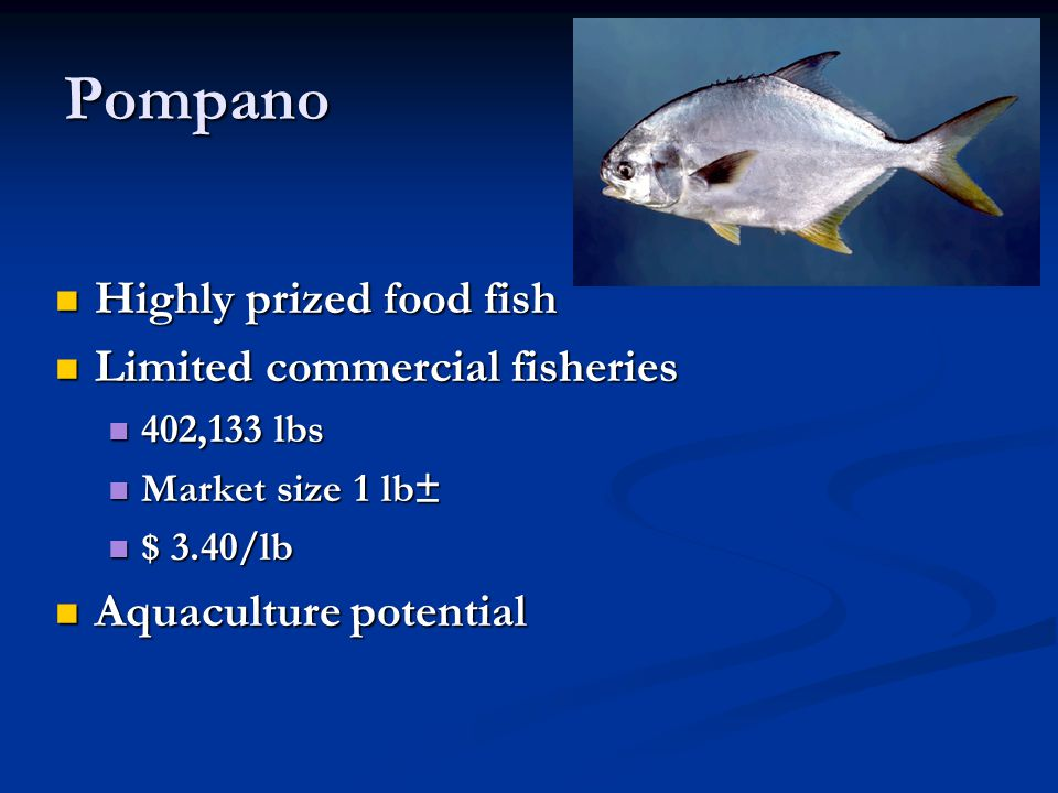 Pompano Highly prized food fish Limited commercial fisheries