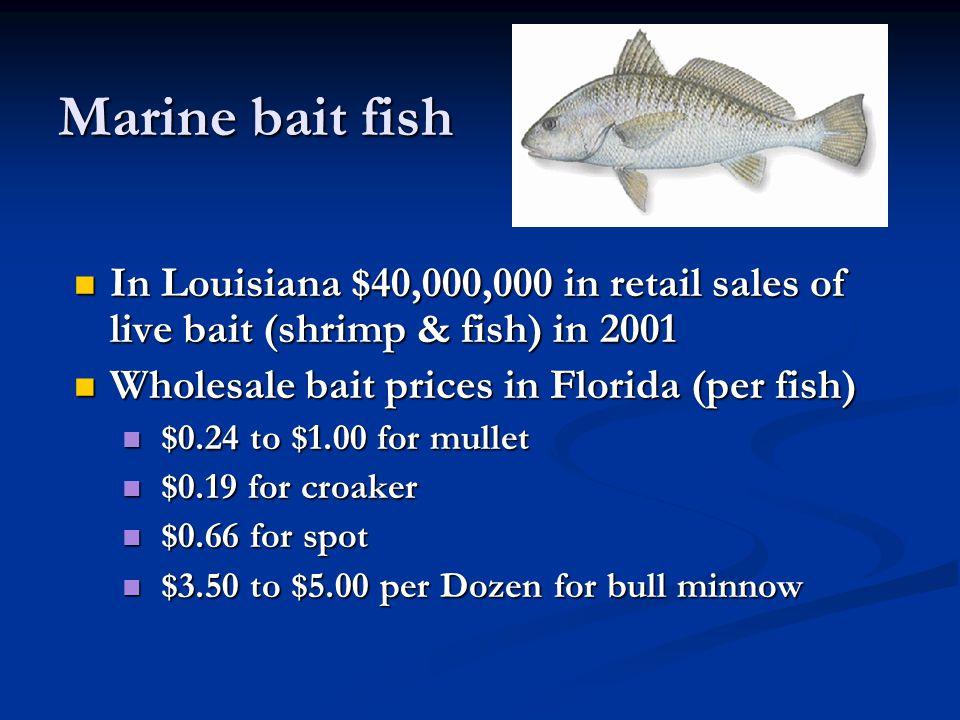 Marine bait fish In Louisiana $40,000,000 in retail sales of live bait (shrimp & fish) in 2001. Wholesale bait prices in Florida (per fish)
