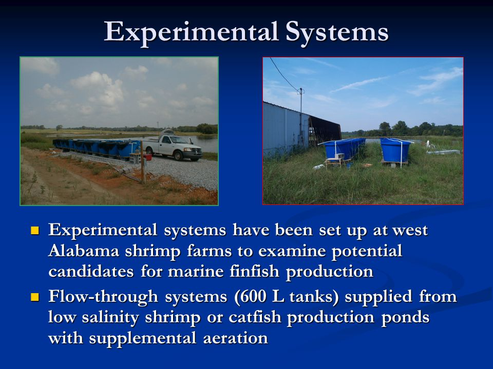 Experimental Systems Experimental systems have been set up at west Alabama shrimp farms to examine potential candidates for marine finfish production.
