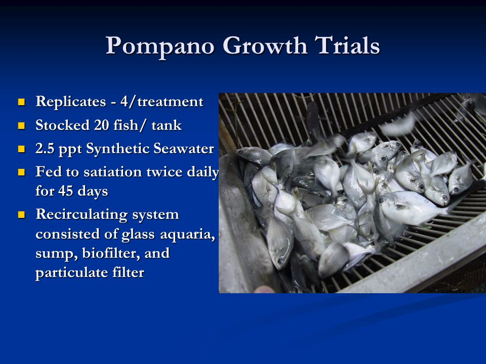 Pompano Growth Trials Replicates - 4/treatment Stocked 20 fish/ tank