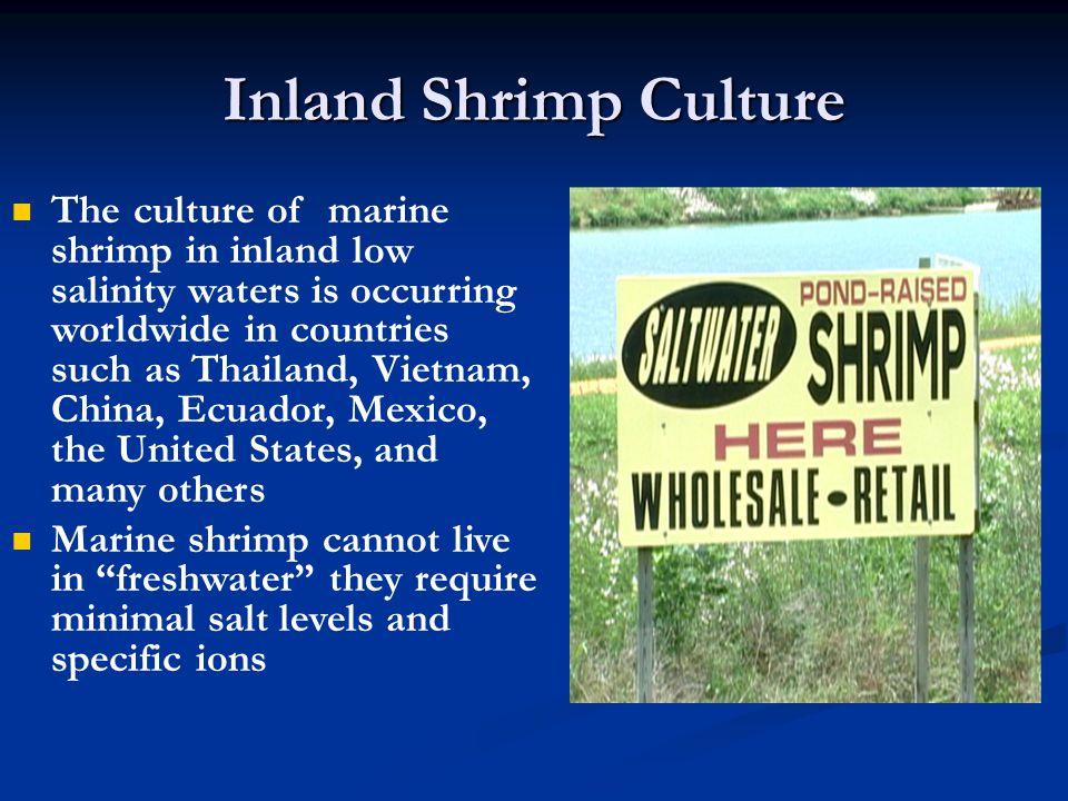 Inland Shrimp Culture