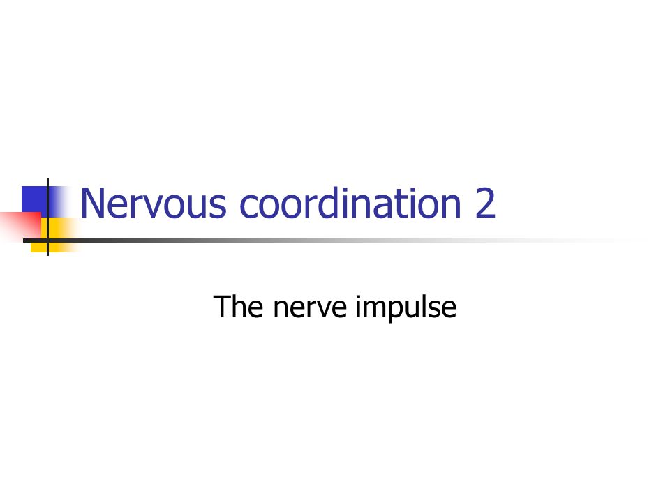 Nervous coordination 2 The nerve impulse