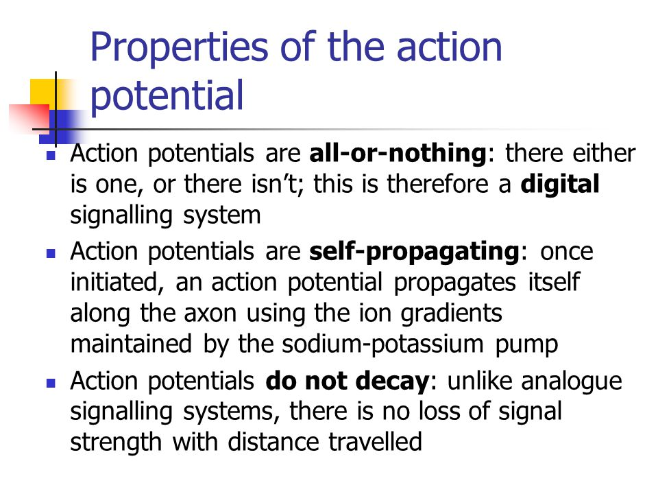 Properties of the action potential