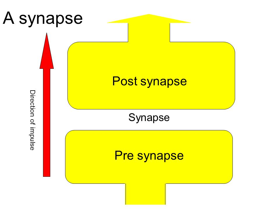A synapse Post synapse Direction of impulse Synapse Pre synapse