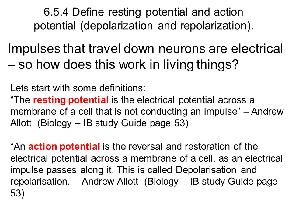 6.5.4 Define resting potential and action potential (depolarization and repolarization).