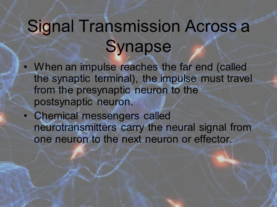 Signal Transmission Across a Synapse