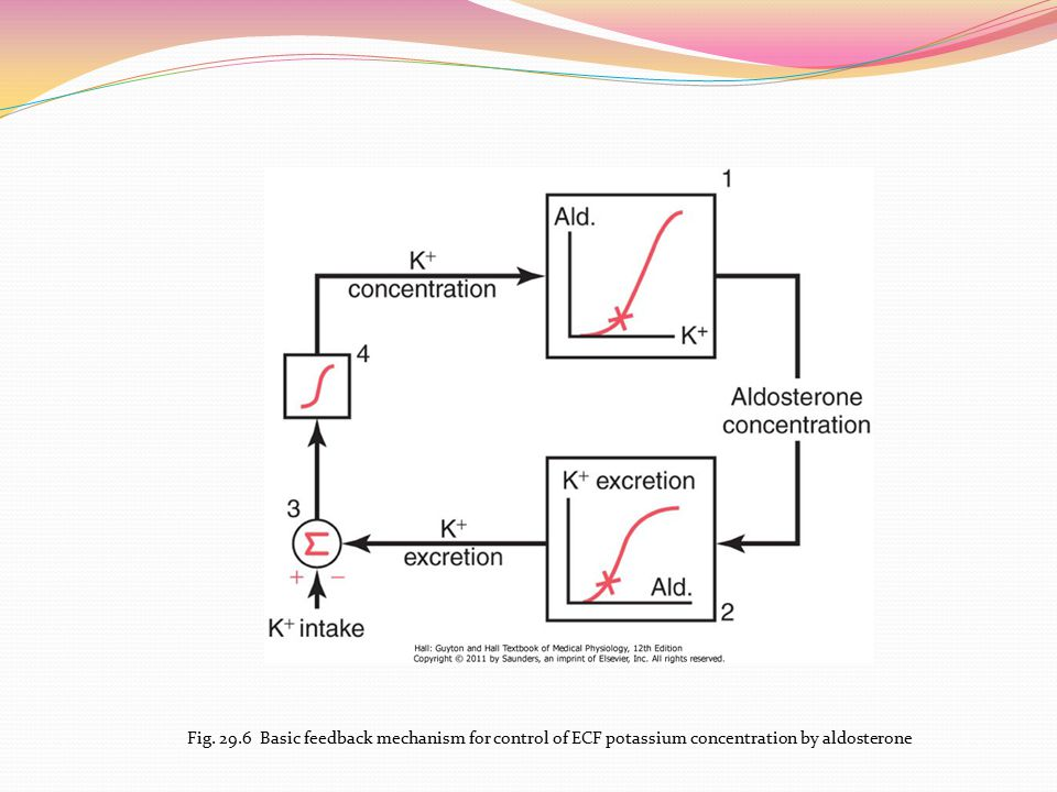 Fig. 29.6 Basic feedback mechanism for control of ECF potassium concentration by aldosterone