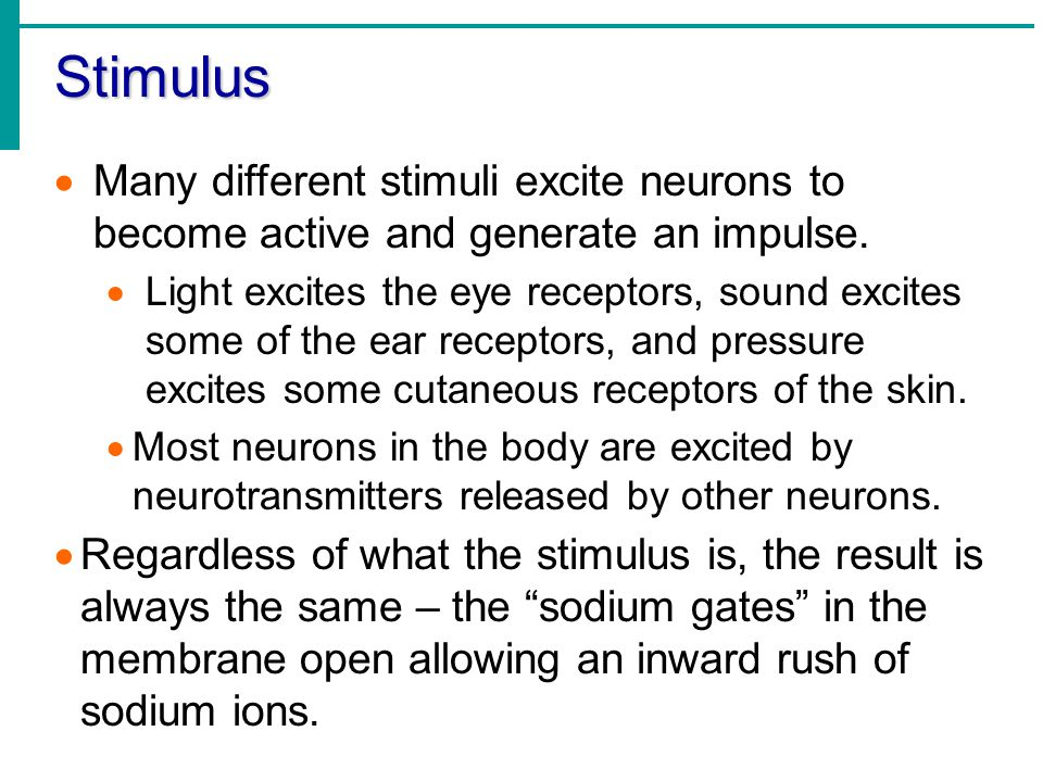 Stimulus Many different stimuli excite neurons to become active and generate an impulse.