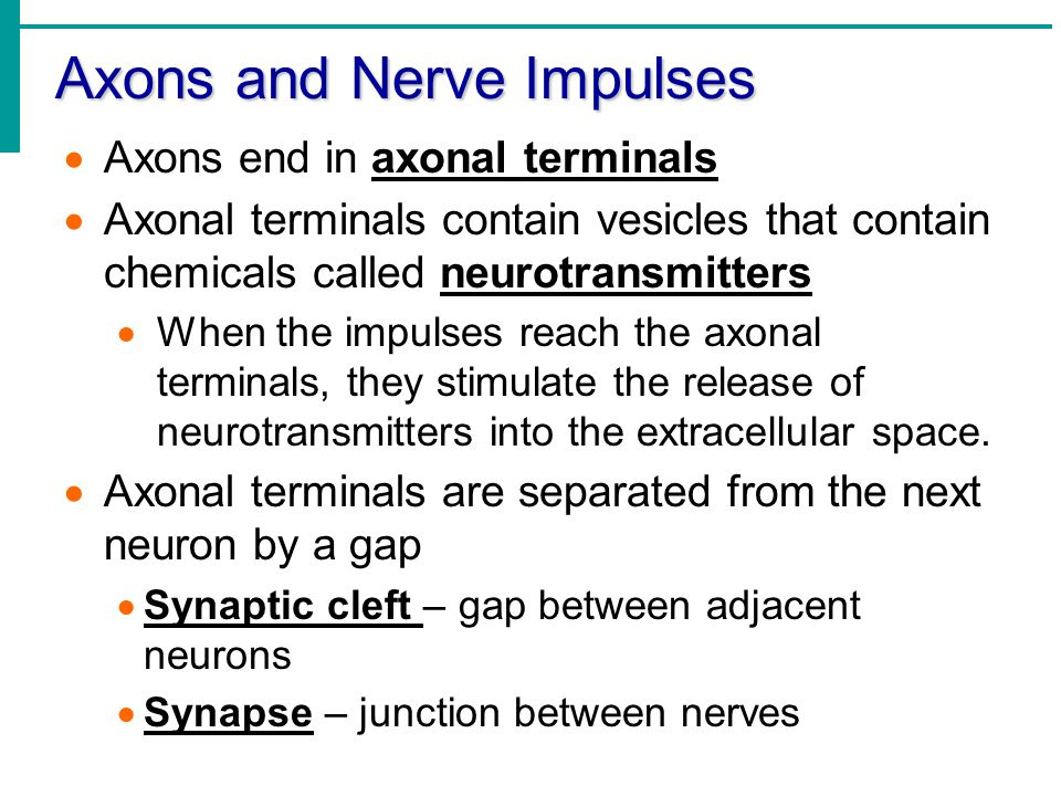Axons and Nerve Impulses