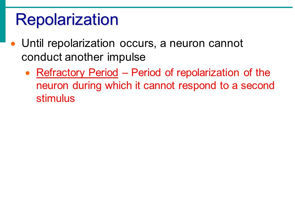 Repolarization Until repolarization occurs, a neuron cannot conduct another impulse.