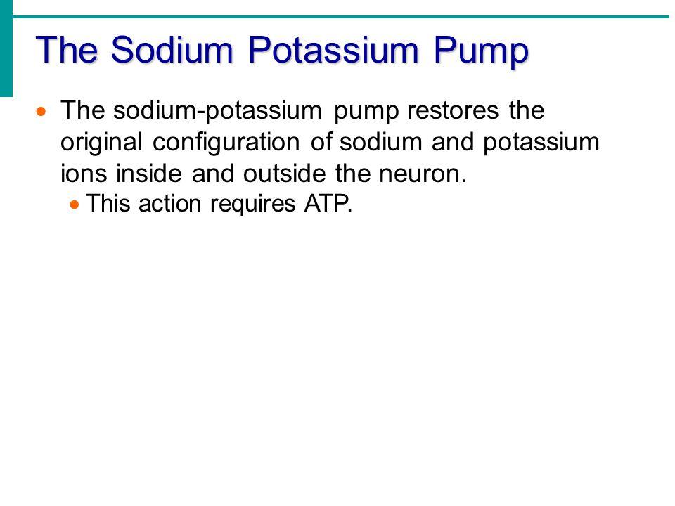 The Sodium Potassium Pump
