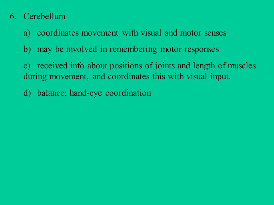 Cerebellum a) coordinates movement with visual and motor senses. b) may be involved in remembering motor responses.