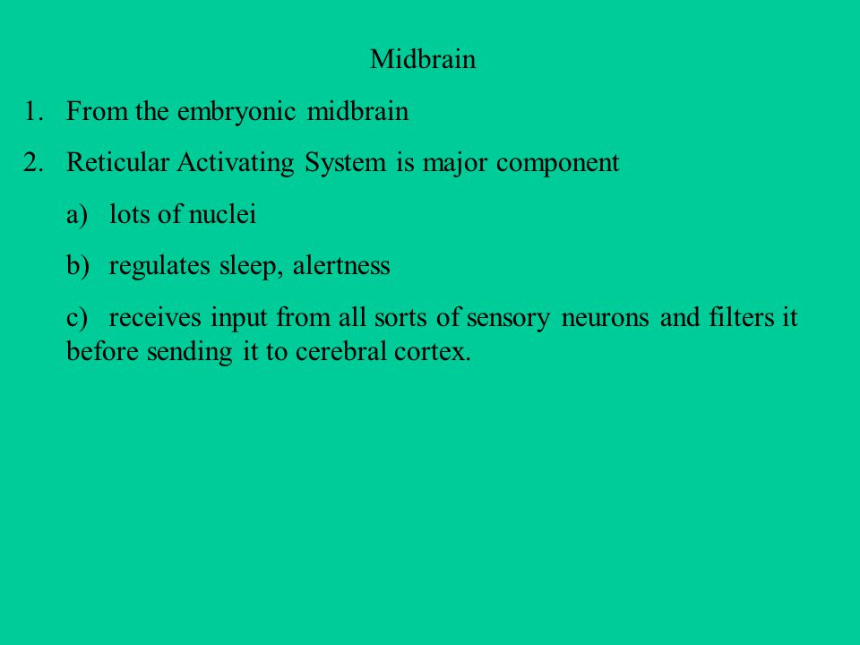 Midbrain From the embryonic midbrain. Reticular Activating System is major component. a) lots of nuclei.