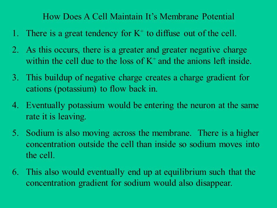 How Does A Cell Maintain It's Membrane Potential