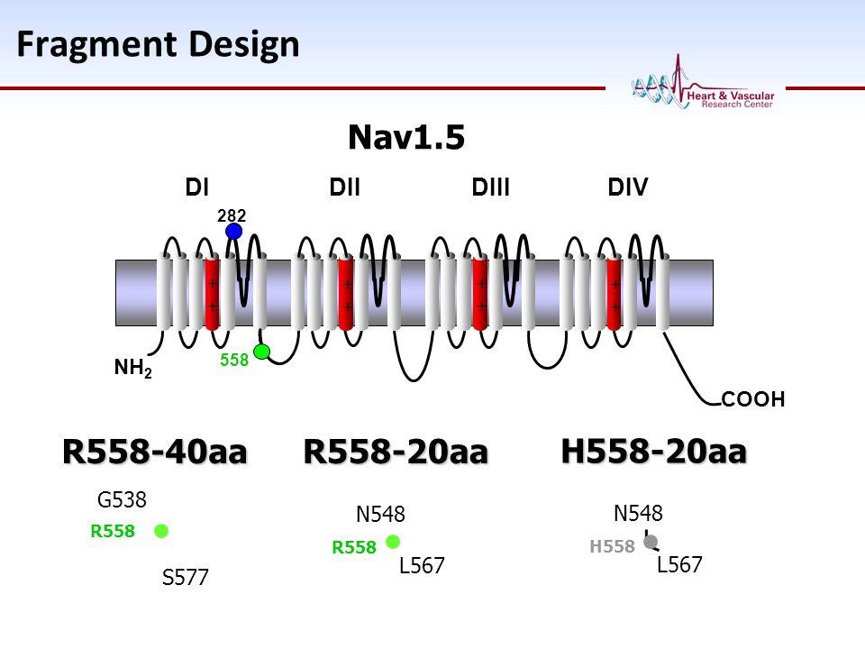 Fragment Design Nav1.5 R558-40aa R558-20aa H558-20aa DI DII DIII DIV