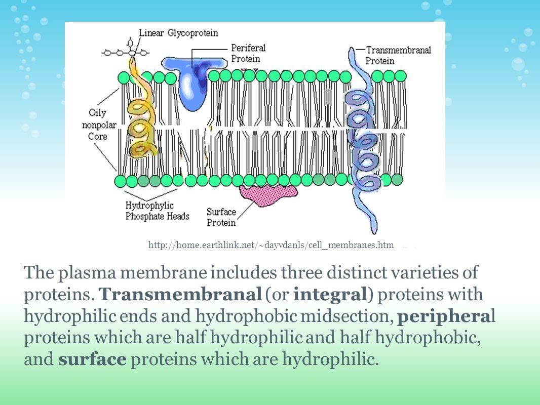 http://home.earthlink.net/~dayvdanls/cell_membranes.htm