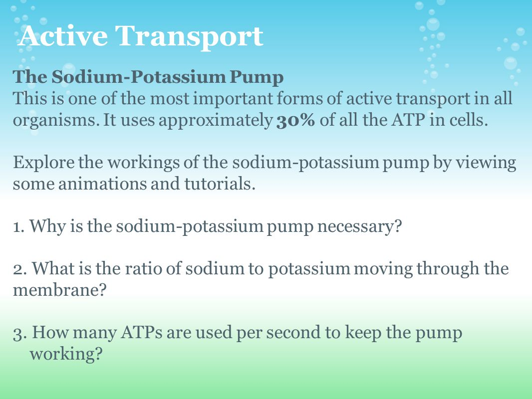 Active Transport The Sodium-Potassium Pump