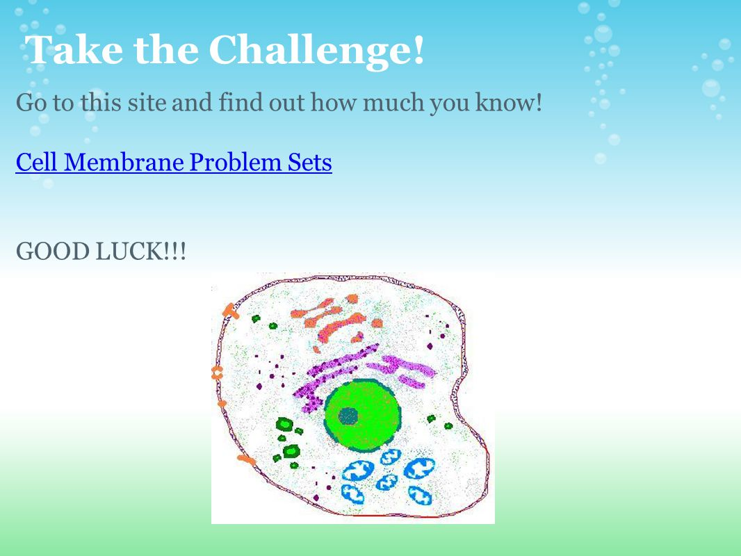 Take the Challenge! Go to this site and find out how much you know!