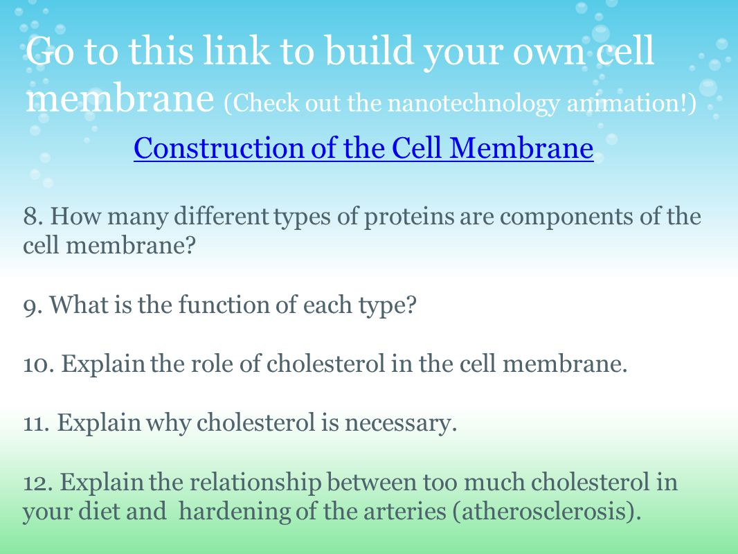 describe current model membrane structure and explain acco The fundamental structure of the membrane is the phospholipid bilayer, which   of the plasma membrane that our current concepts of membrane structure have  evolved  have been particularly useful as a model for studies of membrane  structure  which together account for more than half of the lipid in most  membranes.
