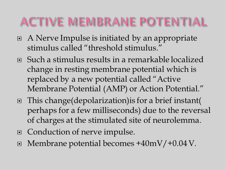 ACTIVE MEMBRANE POTENTIAL
