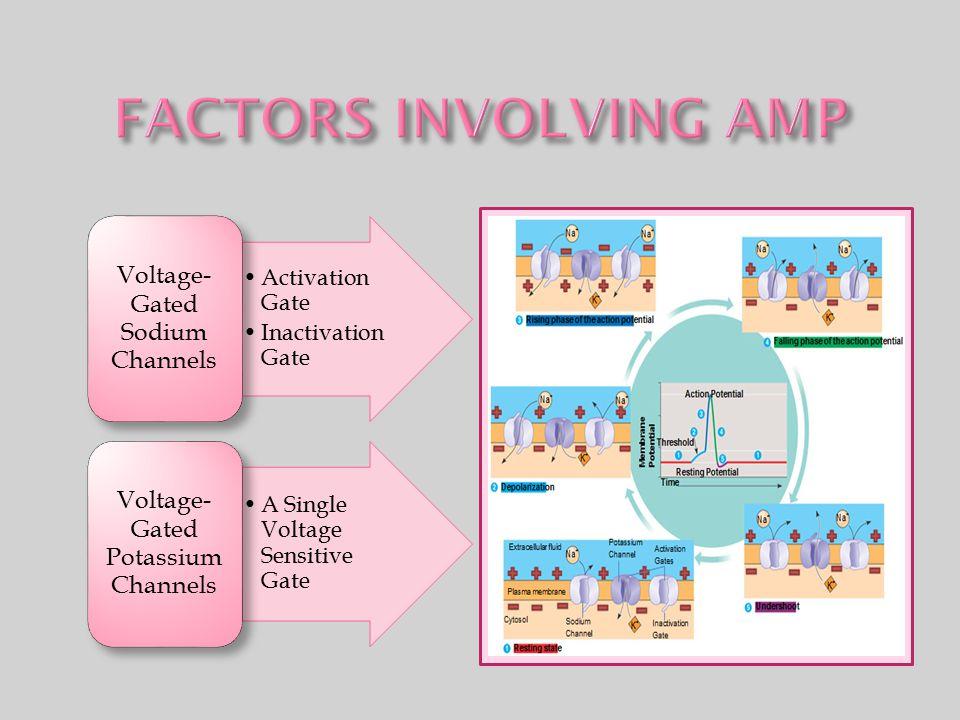 FACTORS INVOLVING AMP Voltage-Gated Sodium Channels