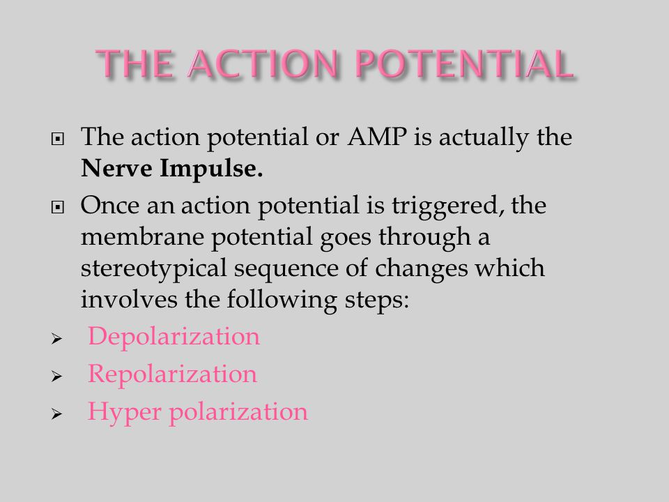 THE ACTION POTENTIAL The action potential or AMP is actually the Nerve Impulse.