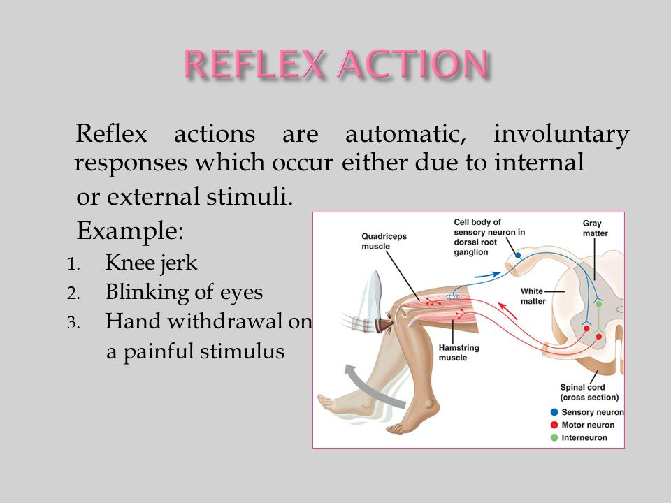 REFLEX ACTION Reflex actions are automatic, involuntary responses which occur either due to internal.