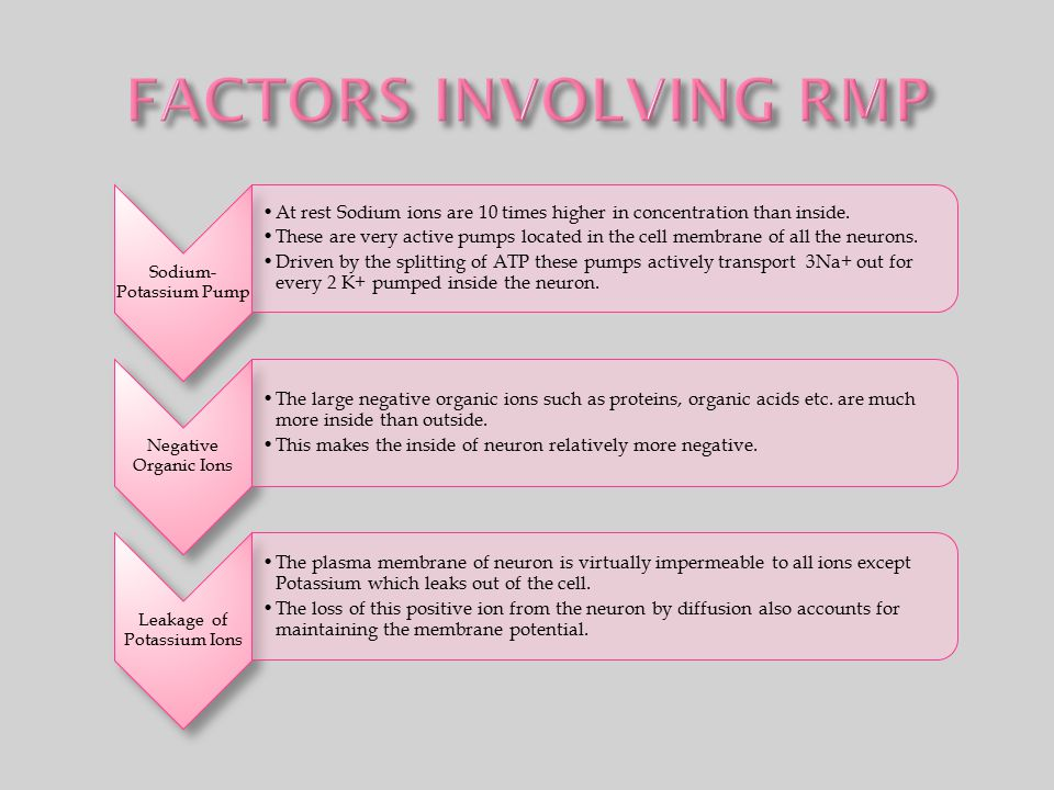 FACTORS INVOLVING RMP Sodium-Potassium Pump