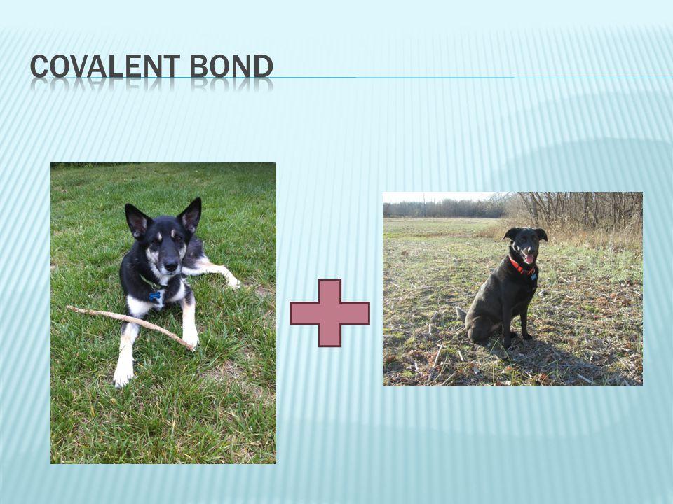 Covalent Bond