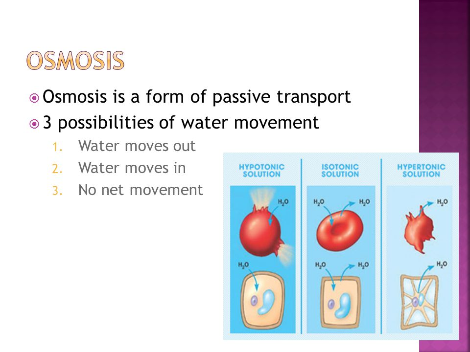 Osmosis Osmosis is a form of passive transport