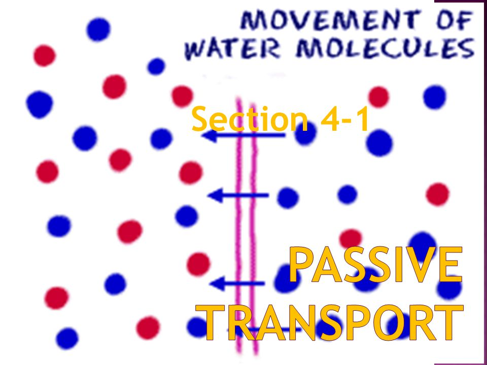 Section 4-1 Passive transport