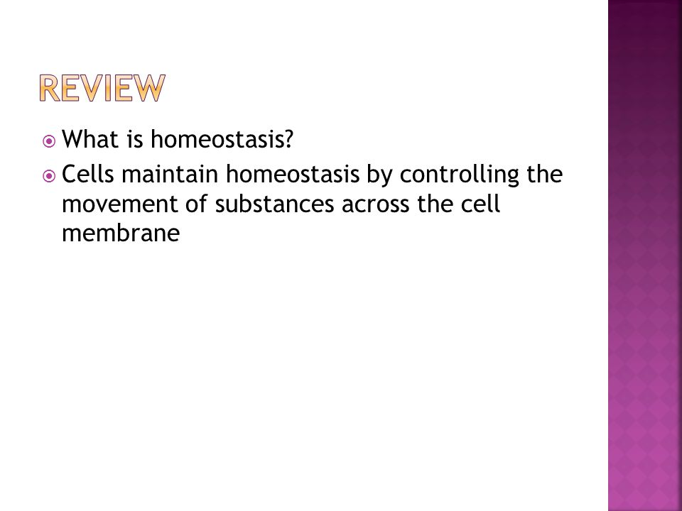Review What is homeostasis