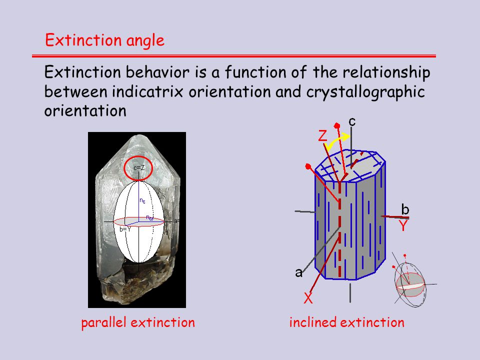 Extinction angle Extinction behavior is a function of the relationship between indicatrix orientation and crystallographic orientation.