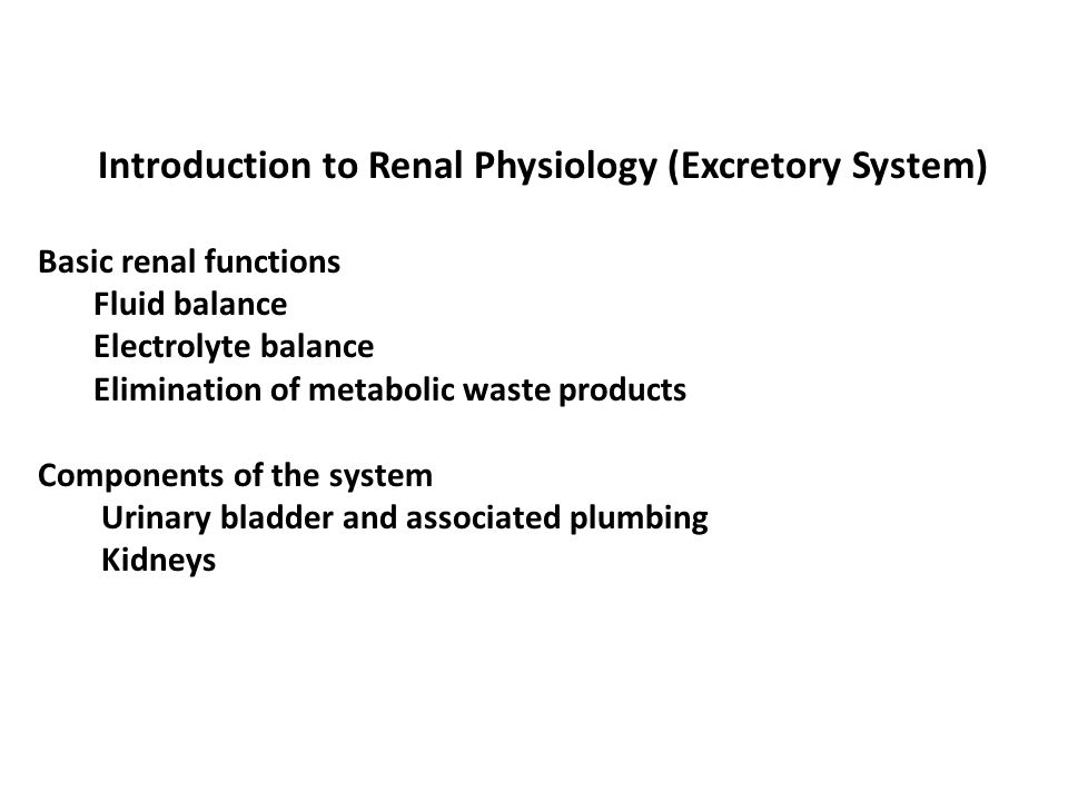 Introduction to Renal Physiology (Excretory System)