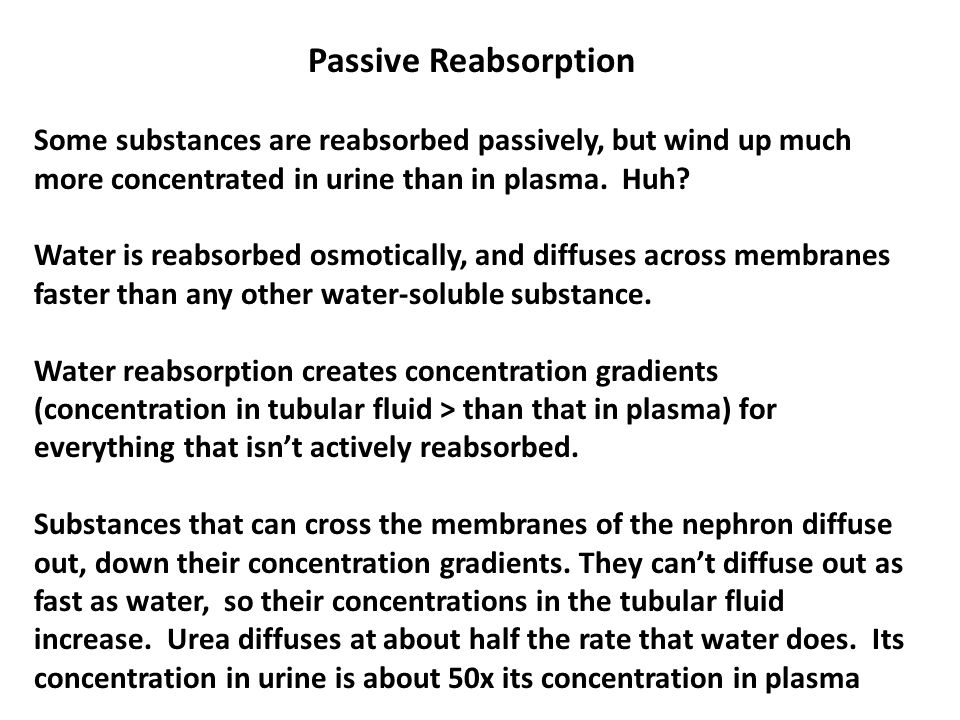 Passive Reabsorption Some substances are reabsorbed passively, but wind up much more concentrated in urine than in plasma. Huh