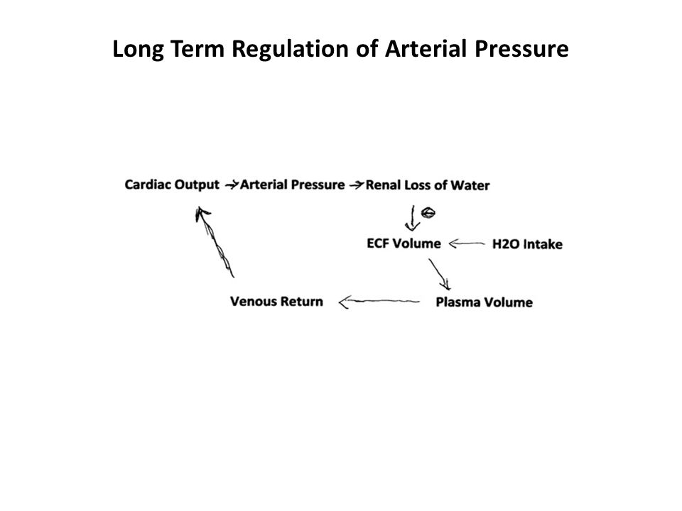 Long Term Regulation of Arterial Pressure