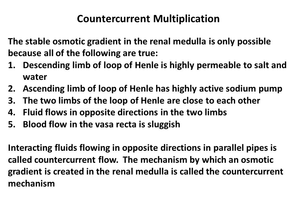 Countercurrent Multiplication