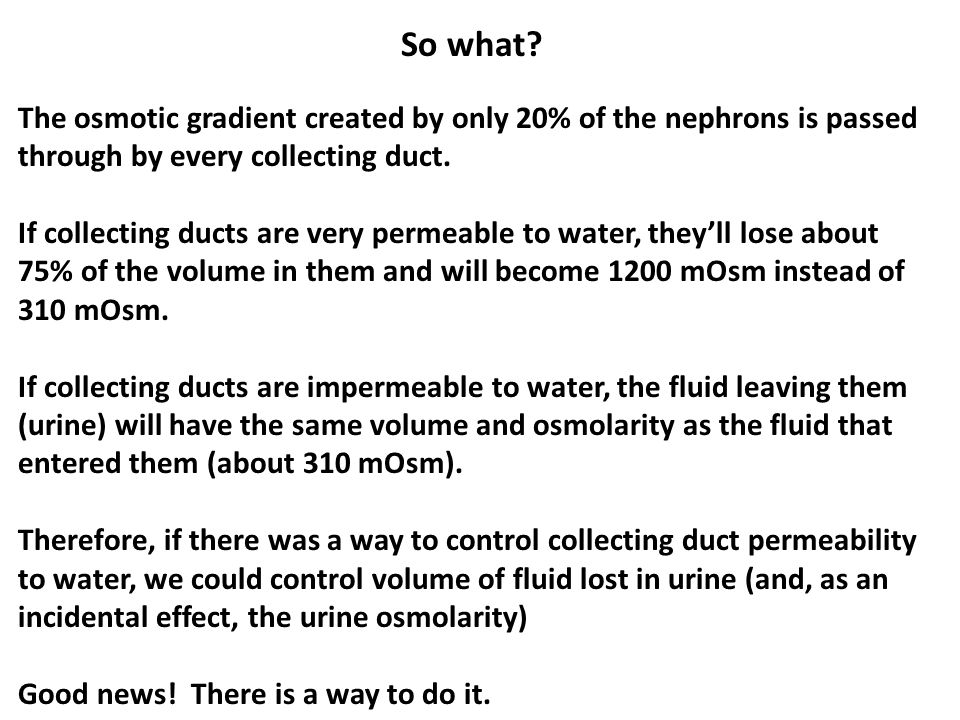 So what The osmotic gradient created by only 20% of the nephrons is passed through by every collecting duct.
