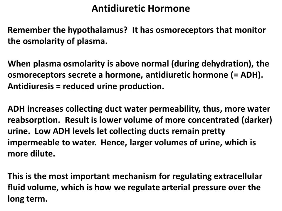Antidiuretic Hormone Remember the hypothalamus It has osmoreceptors that monitor the osmolarity of plasma.