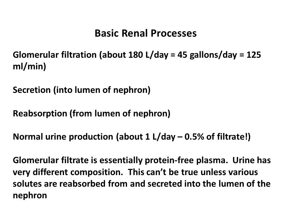 Basic Renal Processes Glomerular filtration (about 180 L/day = 45 gallons/day = 125 ml/min) Secretion (into lumen of nephron)