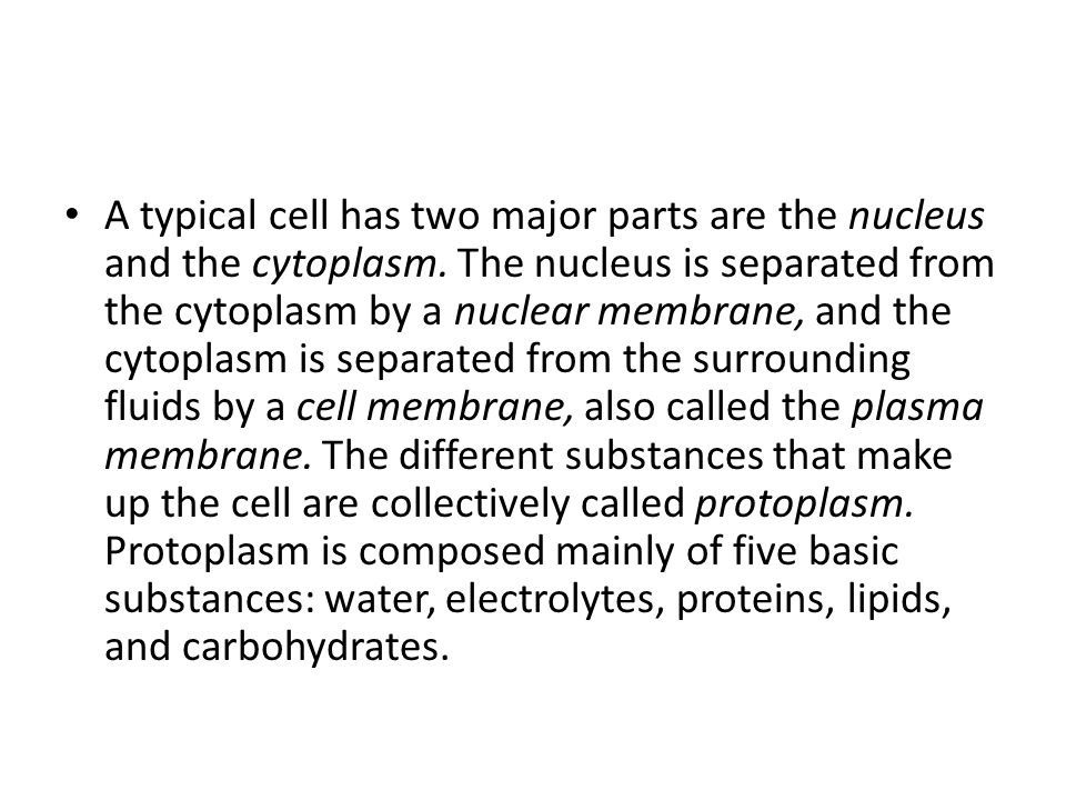 A typical cell has two major parts are the nucleus and the cytoplasm
