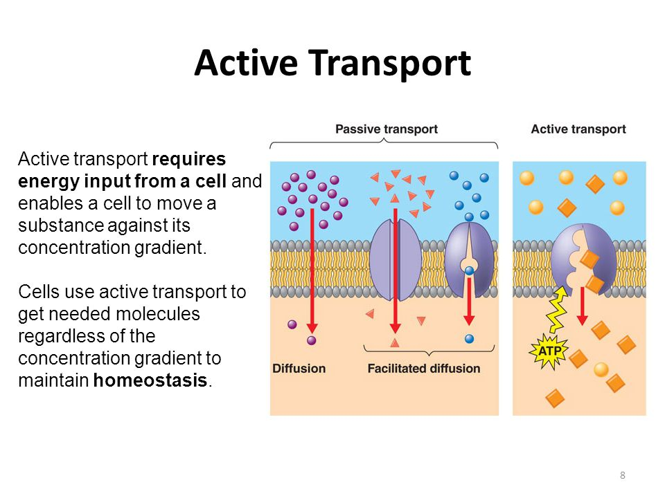 Active Transport Endocytosis And Exocytosis Ppt Video
