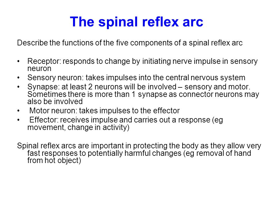 The spinal reflex arc Describe the functions of the five components of a spinal reflex arc.