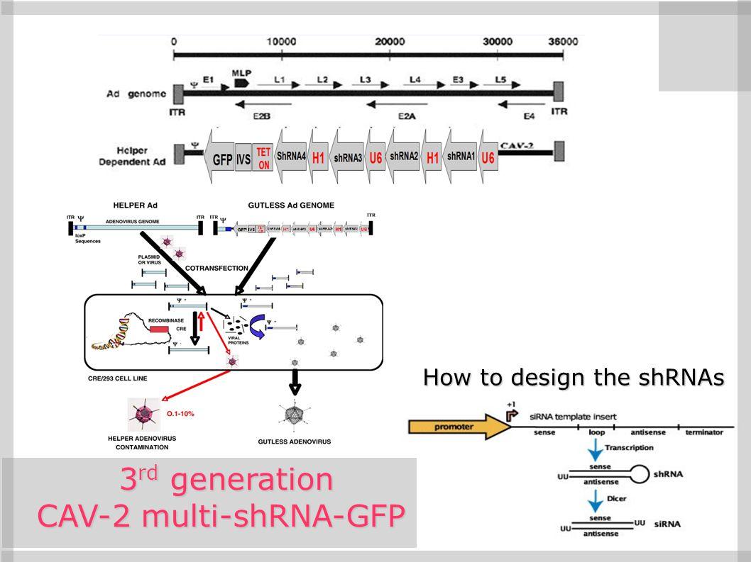 3rd generation CAV-2 multi-shRNA-GFP How to design the shRNAs 8 8